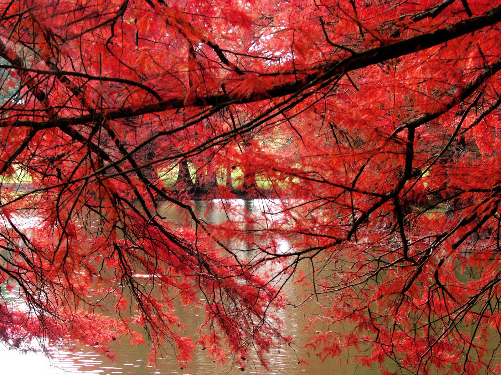 Banilung: Red Wallpaper Designs