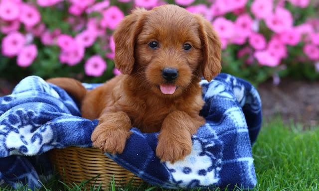 Πράσινο Κίνημα: Παγκόσμια ημέρα σκύλου - Ελλειμματικό θεσμικό πλαίσιο
