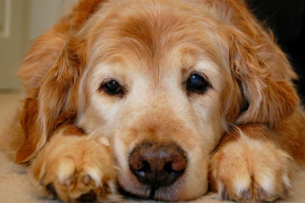 Os benefícios de ter um cachorro