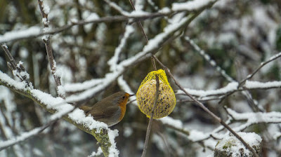 Feeding birds in the garden during winter