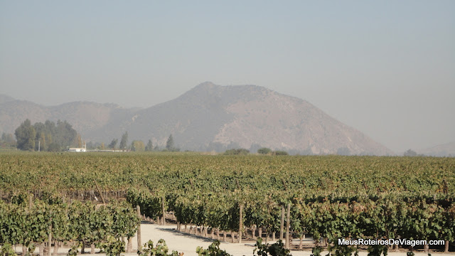 Vinhedos da vinícola Concha y Toro