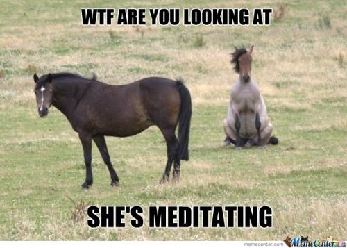 Horse-Meditation_c_105304.jpg