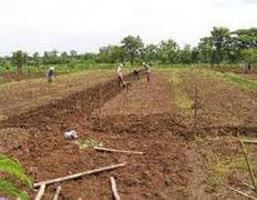 Budidaya Cabai/ Cabe Rawit Untuk Petani