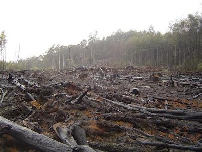 Questões Ambientais Relacionadas a Nova Ordem Mundial