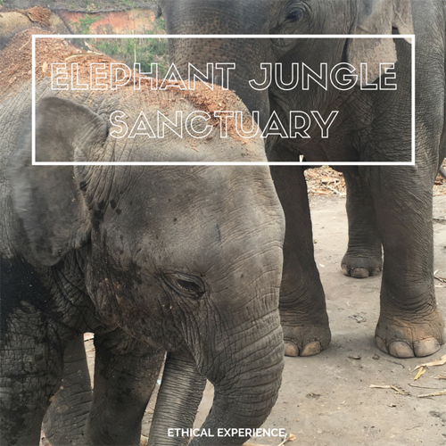 http://www.coconutpathway.com/2016/04/chiang-mai-elephant-jungle-sanctuary.html