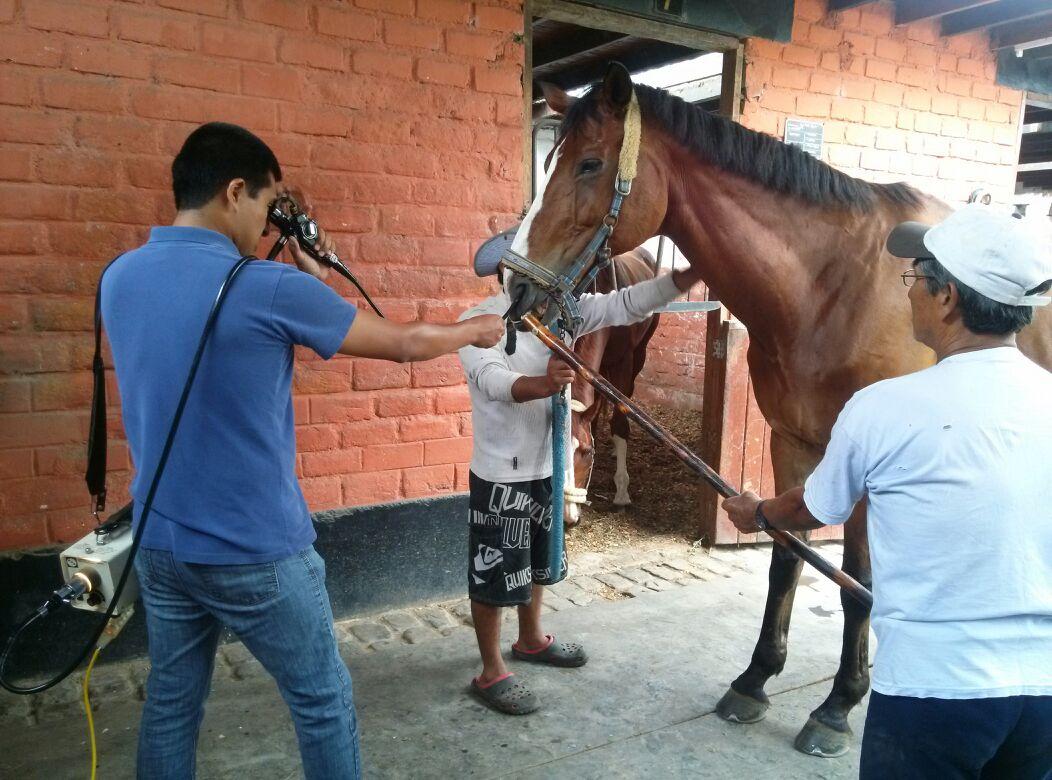 incomodidad del caballo wa