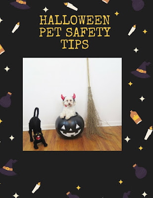Keep your cats, dogs, and other pets safe with these Halloween Pet Safety Tips   #dogs #Halloween