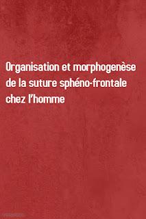Organisation et morphogenèse de la suture sphéno-frontale chez l'homme
