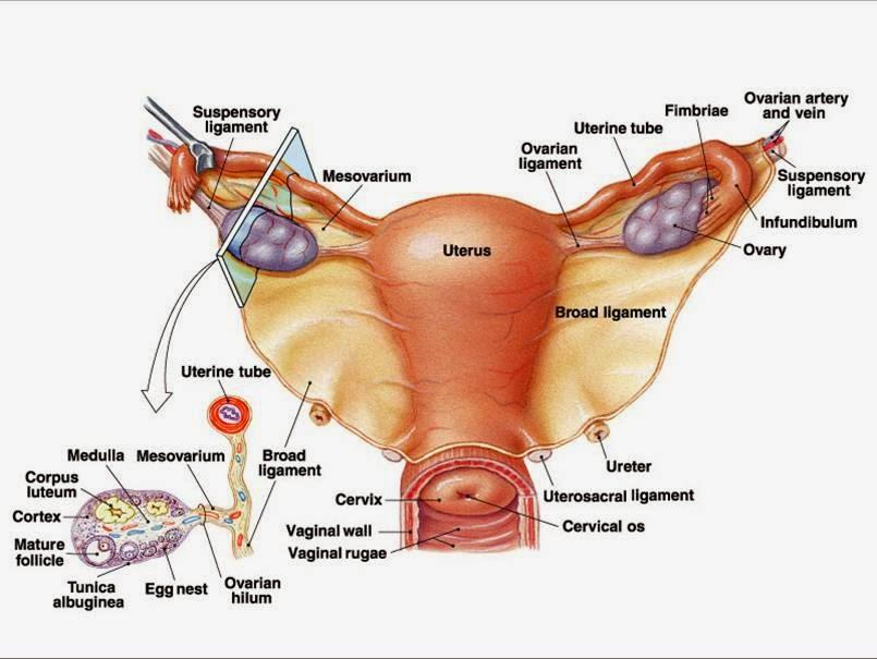 15 Cara Menjaga Kesehatan Organ Reproduksi Pria dan Wanita