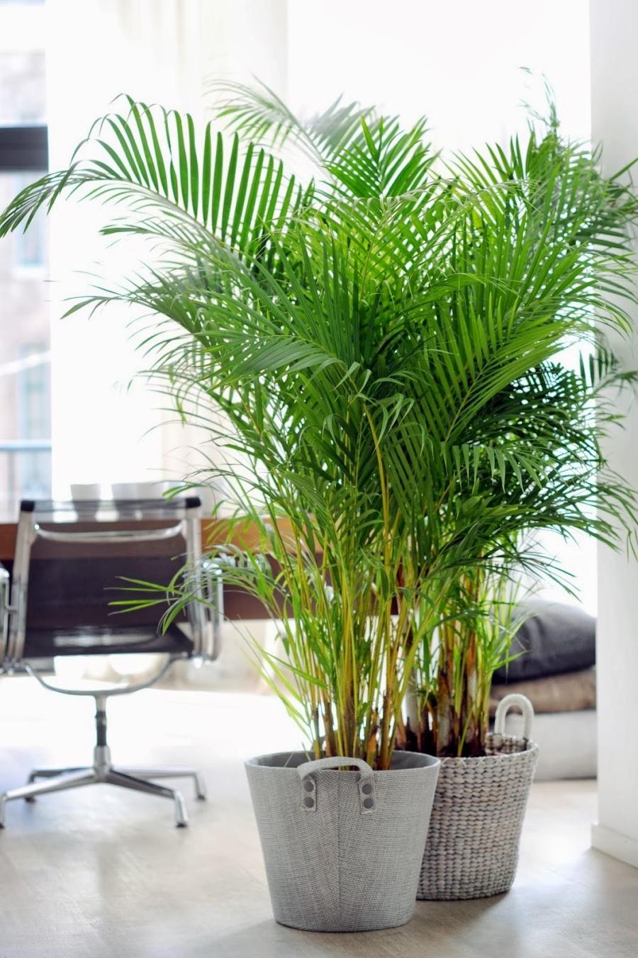 10 pomysłów na zielony kącik, wystrój wnętrz, wnętrza, urządzanie mieszkania, dom, home decor, dekoracje, aranżacje, rośliny, plants, kwiaty, flowers, green, zieleń, pomysły, ideas, styl eko, eco style