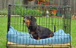 cães em confinamento