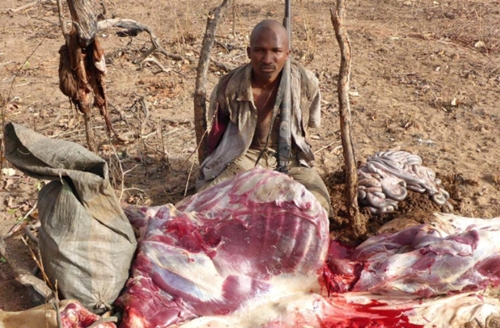 hunter kill antelope at yankari games reserve