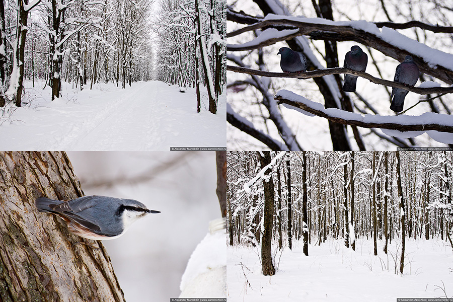 Зимний парк фотографии