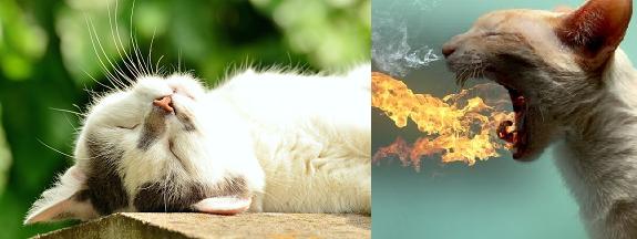 ateşi-yüksek-kedi