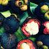 Manfaat Manggis Untuk Kecantikan, Antioksidan Tertinggi Dunia