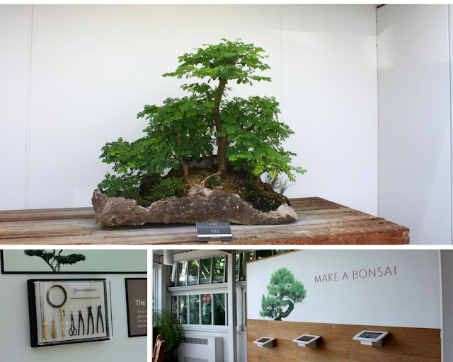 Admiring and learning about bonsai at Como Park Conservatory