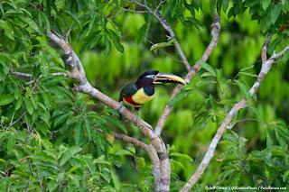 Amazon Rainforest Fragrance Extraction