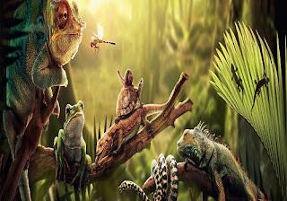 Egzotik Evcil Hayvanlar