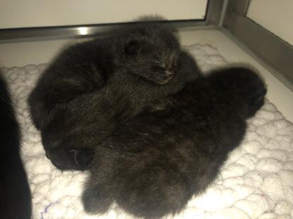 black kittens on fleece blanket