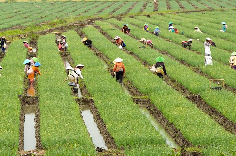 Kementan Pastikan Produksi Pertanian Meningkat Setiap Tahun Jurnal