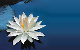 Happiness of the Awakened Heart  6984799-lotus-flower