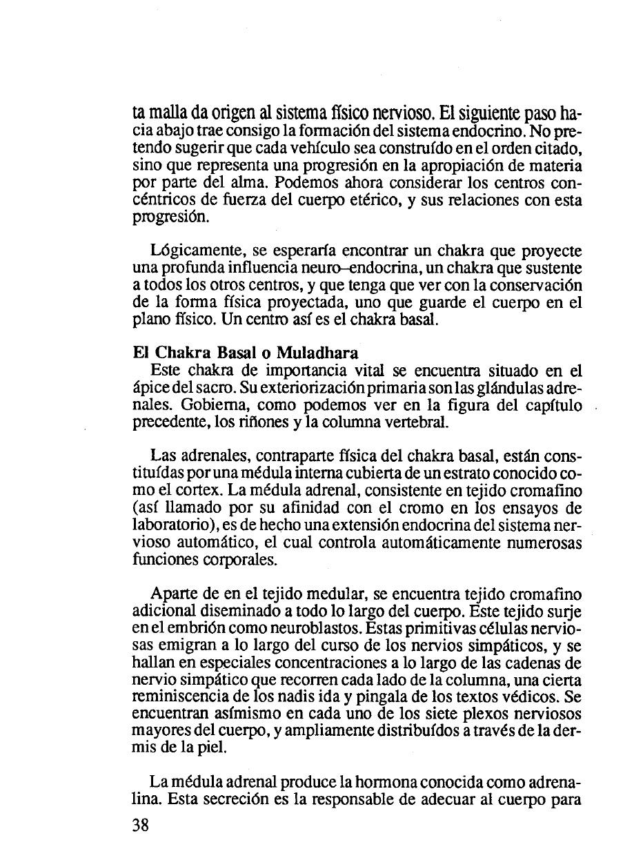 Magnum Opus Aeternam: La radiónica y la anatomía D. Tansley