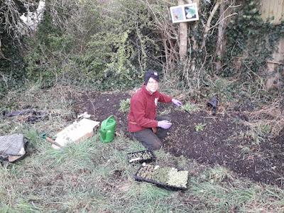 Paul plug planting. Photo: Kerry Loughnane