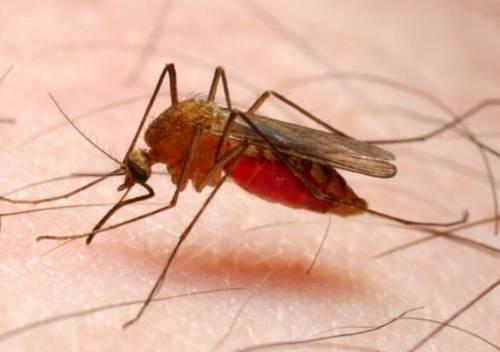 Pengertian Penyakit Malaria