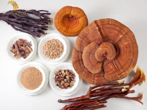 sử dụng nấm linh chi
