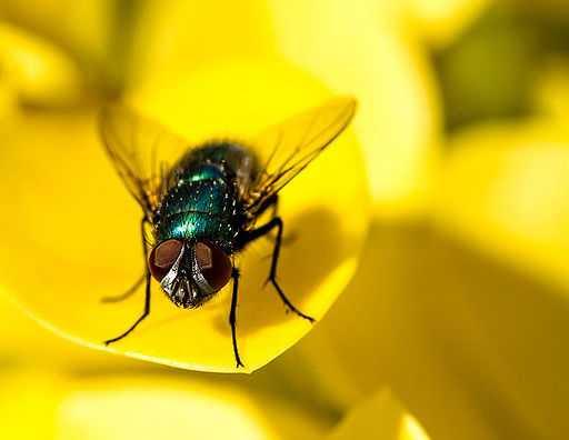 Fotografía de los ojos compuestos de las moscas