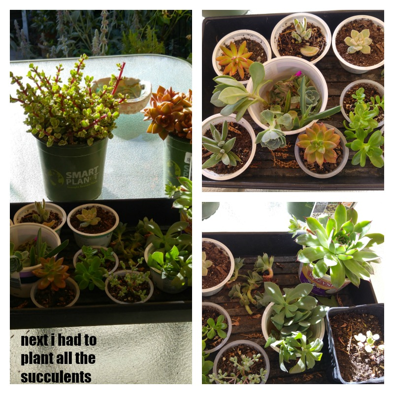 all the succulent cuttings and new plants i used to plant my new diy planter boxes