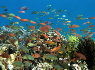 garaman mempengaruhi sifat fisis air laut  Kabar Terbaru- KANDUNGAN KIMIA AIR LAUT