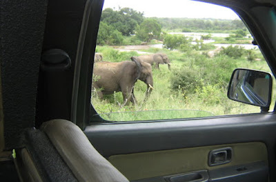 Popular tourist's activities in Uganda-Game drive, boat cruise, and gorilla trekking.