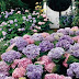 Θέλει προσοχή. 8 θανατηφόρα φυτά που μπορεί να έχεις στον κήπο σου