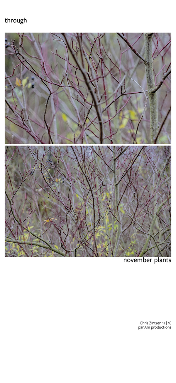 november plants | Chris Zintzen | panAm productions