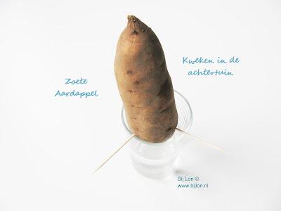 https://bijlon.blogspot.nl/2018/01/experimentje-zoete-aardappel.html