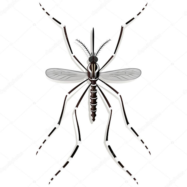 Programa de la SECRETARÍA DE SALUD de Medellín ✅ para el control de las enfermedades: Dengue, Zika y Chikungunya. ✅