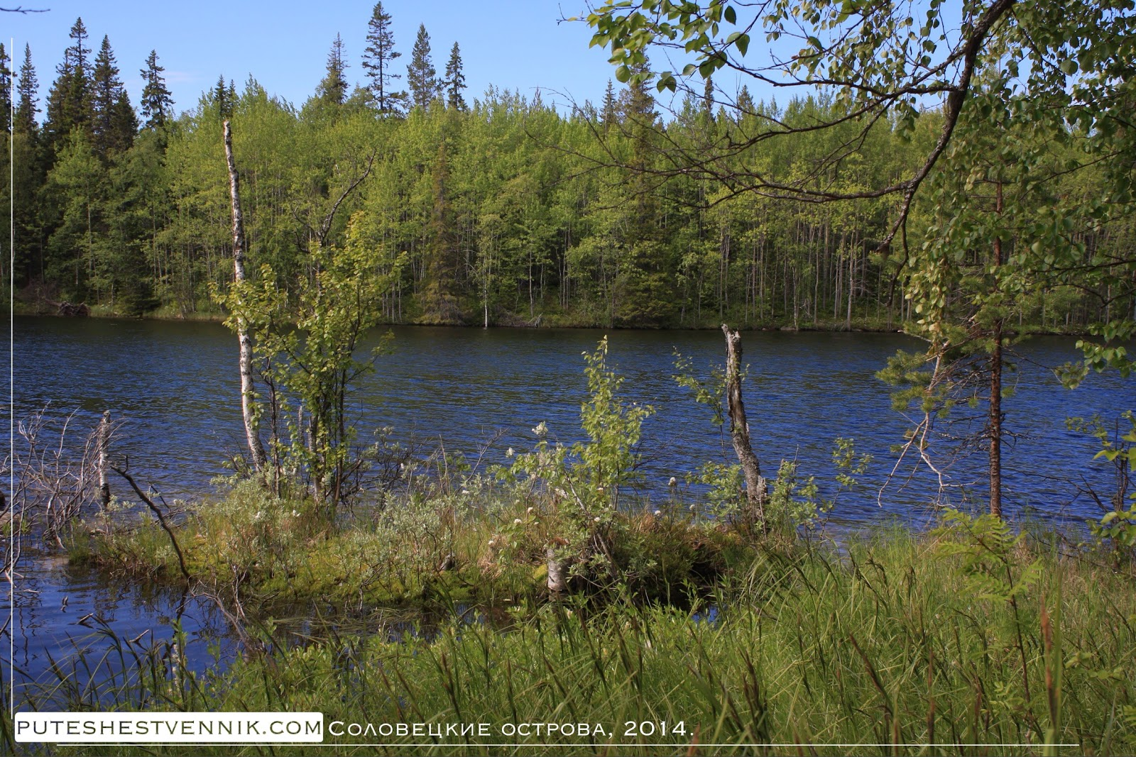 Озеро в лесу на Соловках
