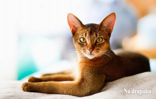 Silikonowe żwirki dla kotów