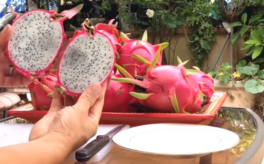 Classification and Morphology of Dragon Fruit Plants