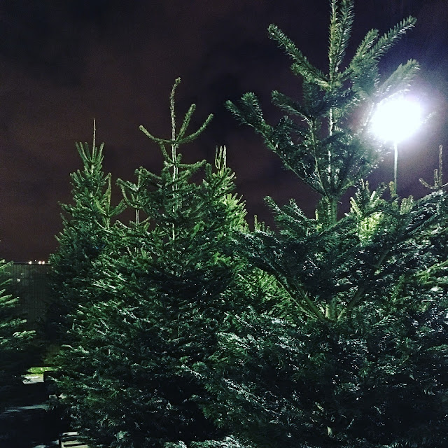 Real Christmas trees delivered and installed across UK by Pines and Needles