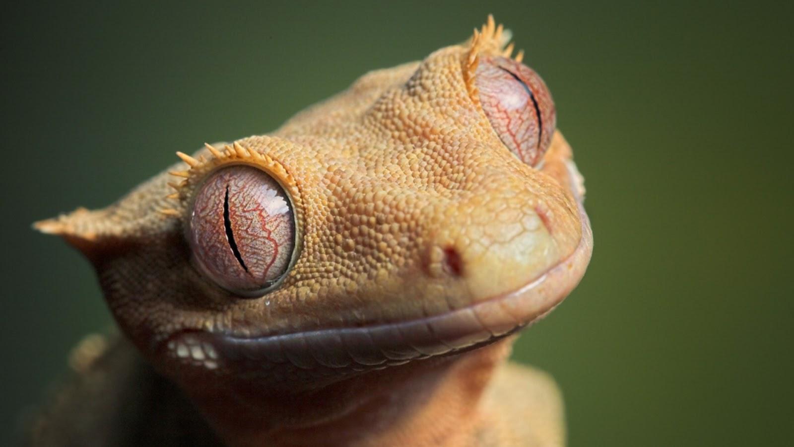 H D Reptiles Wallpaper Desk ...