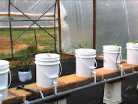 Inilah Tahapan Menanam Terong Dengan Teknik Dutch Bucket System