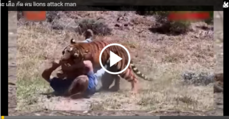 Lion Attack Man - VDO 4 Alls