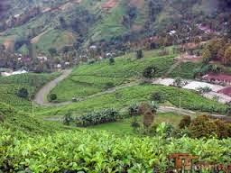 Aktivitas Penduduk Daerah Pegunungan Materi Ips