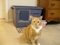 An orange tabby cat in front of a converted litterbox