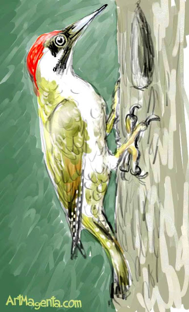 Green Woddpecker sketch painting. Bird art drawing by illustrator Artmagenta