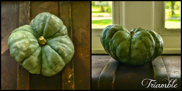 http://www.ironoakfarm.blogspot.com/2014/10/triamble-pumpkin.html