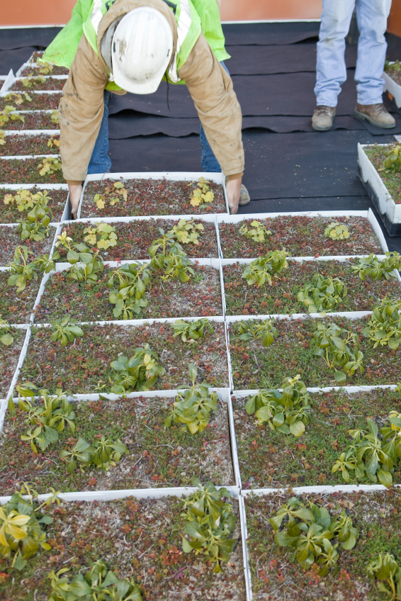 Green Roofs The Future Of Urban Buildings Ansi