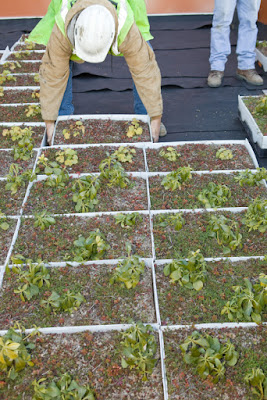 Install Green Roof
